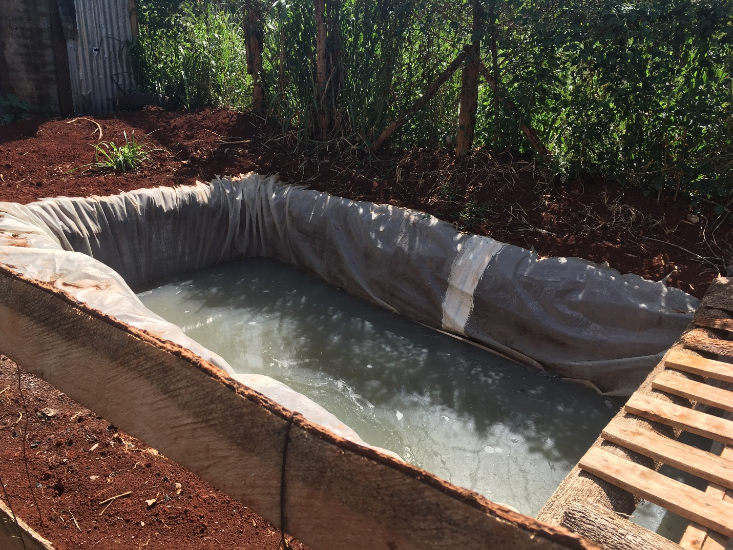 Fish farming initiated by Kiini Sustainable Initiative