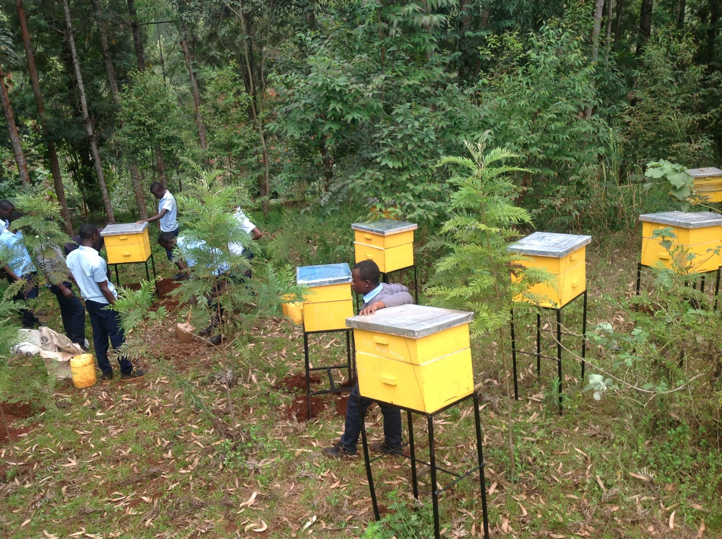 Installation of beehives